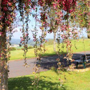 Vue du Parc de l'EPSM de Lozère